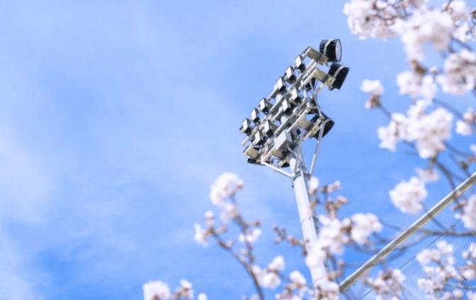 球場照明と桜